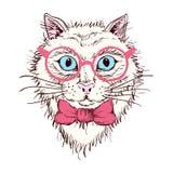 Dé el retrato exhausto de un gato en vidrios Fotos de archivo