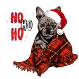 Dé el retrato exhausto del perro del dogo francés que lleva el sombrero de santa y la manta de la tela escocesa Cartel de la Navi stock de ilustración