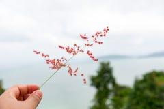 Dé el tacto de una hierba de lámina escena hermosa con la opinión borrosa del mar foto de archivo libre de regalías