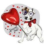 Dé el terrier exhausto de Jack Russel con el baloon de la forma del corazón Tarjeta de felicitación del día de San Valentín del v imagenes de archivo