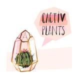 Dé a extracto exhausto del vector el ejemplo suculento de la planta con el terrario áspero y la planta suculenta en colores en co libre illustration