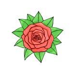 Dé la acuarela exhausta y entinte la rosa del rosa con las hojas aisladas encendido Imagen de archivo