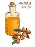 Dé la botella de aceite exhausta del argan y ramifique bosquejo coloreado Arte del vector Fotografía de archivo