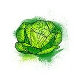 Dé la ensalada de col fresca brillante colorida exhausta de la lechuga Watercol stock de ilustración
