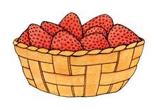 Dé la fresa exhausta de la acuarela en la cesta aislada en el fondo blanco Fotos de archivo