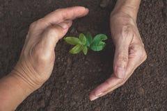 Dé la protección de una plántula verde con el crecimiento en el suelo encendido foto de archivo