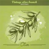Dé la rama de olivo exhausta Fotografía de archivo