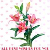 Dé las flores exhaustas del lirio de la acuarela aisladas en el fondo blanco Flores del flor de la primavera Cartel ideal para el Fotografía de archivo