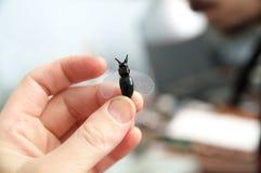 Dé llevar a cabo la escultura plástica miniatura hecha a mano plástica de la abeja del juguete, afición de la artesanía Foto de archivo libre de regalías