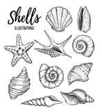Dé los ejemplos exhaustos del vector - colección de conchas marinas mari