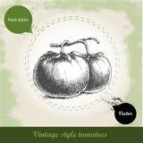 Dé los tomates exhaustos del estilo del bosquejo en fondo del vintage del grunge Fotografía de archivo libre de regalías