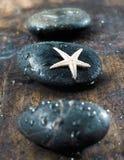 Dé masajes a las piedras con las estrellas de mar Imagen de archivo libre de regalías