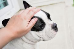 Dé palos de ciego un perro Foto de archivo libre de regalías