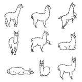 Dé a Perú exhausto el guanaco animal, alpaca, vicuña libre illustration