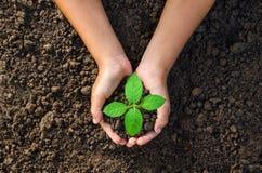dé sostener la planta para replantar joven en worl del verde del concepto del suelo Fotos de archivo libres de regalías