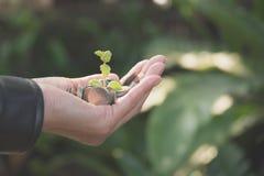 Dé sostener monedas de oro del dinero con la planta en su mano para el financi fotografía de archivo