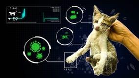 Dé sostener un gato con análisis el patógeno del germen del fondo gifographic del animal y del animal doméstico para la educación stock de ilustración