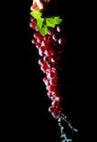 Dé sostener un manojo de uvas con agua que fluye abajo aisladas en un negro Foto de archivo
