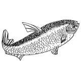 Dé a tinta exhausta el bosquejo monocromático del vector de la acción de pescados Imagen de archivo