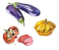 Dé a verduras exhaustas de la acuarela la calabaza amarilla, berenjena, paprika en el fondo blanco Imagen de archivo