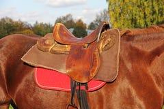 Débarras de la selle sur un cheval brun Photos stock