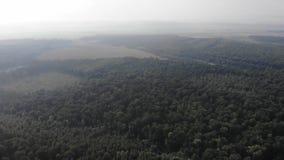 Déboisement de forêt de chêne en Ukraine La vue aérienne, pilotent la technique en avant clips vidéos