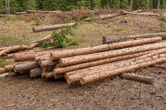 Déboisement et notation industrielle d'arbre image libre de droits