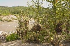 Débris d'inondation de rivière Images stock