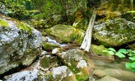 Débris en rivière de montagne Image stock
