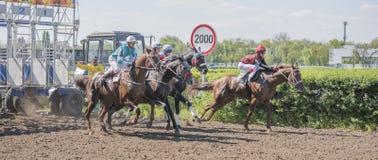 Début de course de chevaux au champ de courses photo libre de droits