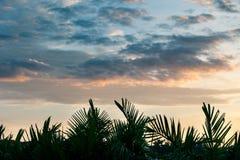 Début de la matinée au-dessus de la forêt tropicale Images stock