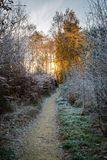 Début de la matinée pendant l'hiver de forêt Photographie stock
