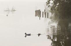 Début de la matinée sur le lac Image libre de droits