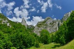 Début de s'élever à la réservation de Scarita-Belioara de la jument de Muntele Photographie stock