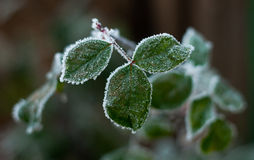 Décembre blanchi Image libre de droits