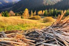 Décharge des déchets en bois contre une belle forêt dans les rayons d'or du coucher de soleil Photos stock