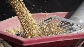 D?chargeant le bl? dans la remorque de tracteur pour semer la terre clips vidéos