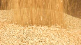 Déchargement du grain dans une pile image libre de droits