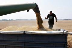 Déchargement du grain field_3 Photos libres de droits