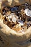 Déchets après cuisson des plats de fruits de mer photos stock