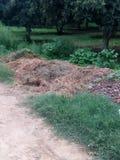 Déchets au sol herbeux Photographie stock libre de droits