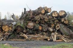 Déchets de décharge du bois de rebut Les troncs et les branches de l'arbre empilé dans les tas image libre de droits