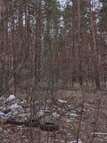 Déchets de ménage, déchets en plastique dans la forêt de pin photo libre de droits