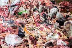 Déchets de poisson cru image libre de droits