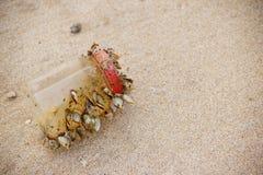 Déchets en mer affectant des espèces marines photos stock