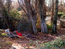Déchets jetés dans la forêt par l'homme photographie stock