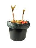 Déchets organiques dans le seau noir Photo stock