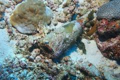 Déchets sous-marins Photo libre de droits