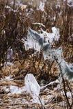 Déchets sur des buissons images stock