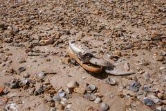 Déchets sur la plage Chaussure abandonnée Déchets et pollution sur la plage Contamination et environnement photo libre de droits